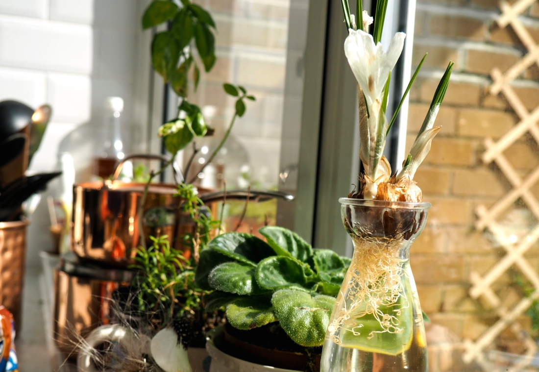 Crocus in glass vase, Urban Jungle Bloggers