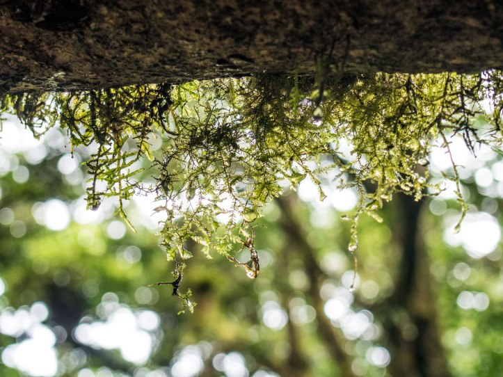 Moss on a branch in Monteverde Cloud Forest, Costa Rica via A Ranson Note