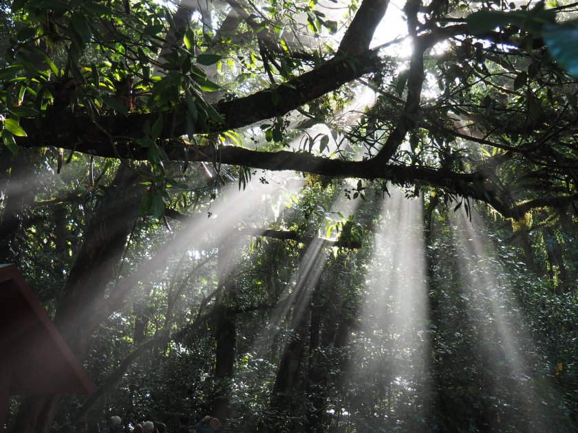 Sun shining through the trees in the Cloud Forest
