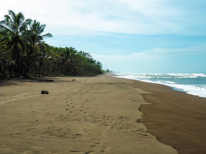 Tortuguero beach, Costa Rica via A Ranson Note