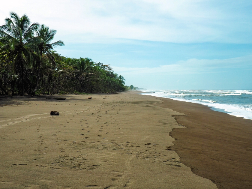 Tortuguero beach, Costa Rica via A Ranson Note