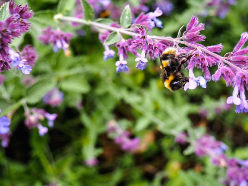 Bees in Kew Gardens