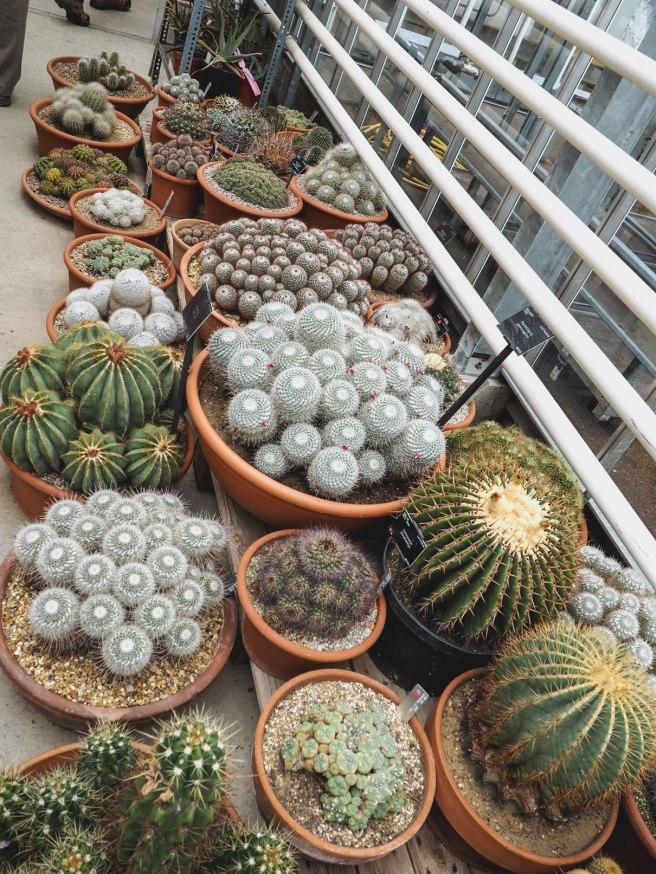 Cactus-in-Kew-Gardens