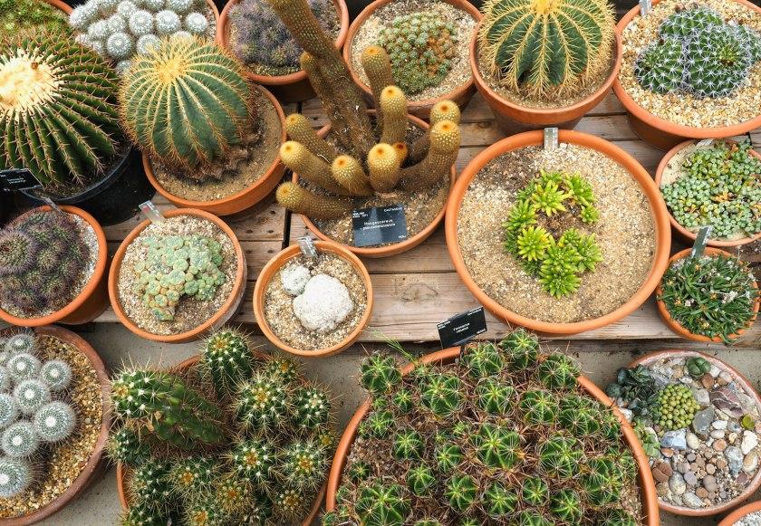 Cactus in Kew Gardens