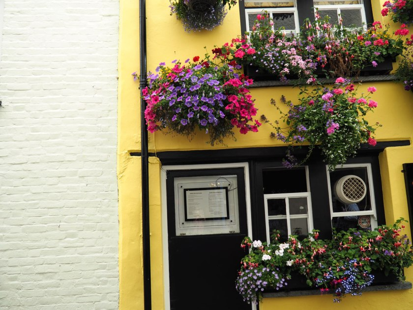 Flowers-in-Padstow