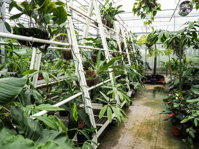 Kew Gardens Tropical Nursery